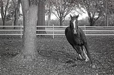 Barnyard Photograph - Running Horse by Steven  Michael