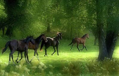 Running Wall Art - Photograph - Running Horses by Allan Wallberg