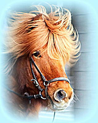 Photograph - Running In The Fields, Waving My Golden Mane  by Hilde Widerberg