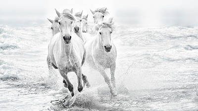 Running Horse Photograph - Running In The Sea by Lucie Bressy