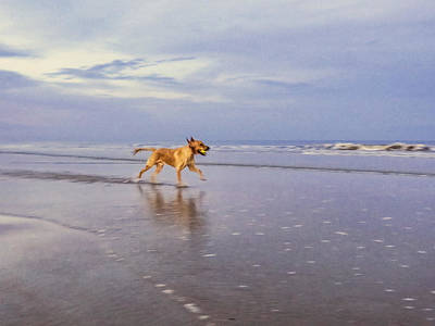 Dogs Photograph - Running On The Beach by Zina Stromberg