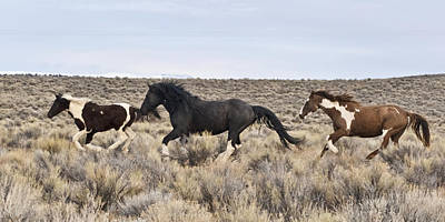 Forelock Photograph - Running Wild 3 W1155  by Wes and Dotty Weber