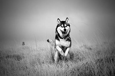 Running Wolf Art Print
