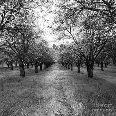 Photograph - Runway by Rebecca Cozart