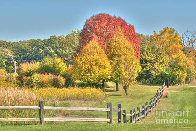 Trunks Photograph - Rural Autumn by Deborah Smolinske