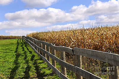 August Photograph - Rural Landscape With Fence by Elena Elisseeva