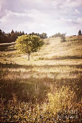 Rural Landscape With Single Tree Print by Elena Elisseeva