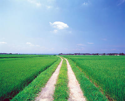 Peaceful Scene Photograph - Rural Road Between Crop Fields by Panoramic Images