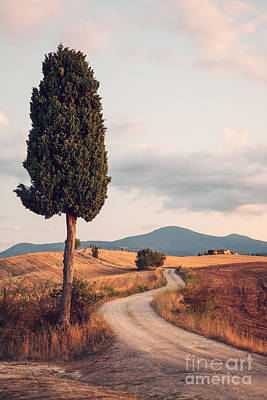 Tuscany Italy Photograph - Rural Road With Cypress Tree In Tuscany Italy by Matteo Colombo