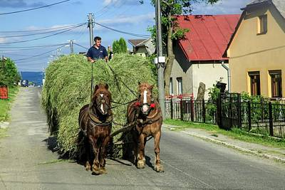 Cart Horse Photograph - Rural Slovakia by Photostock-israel