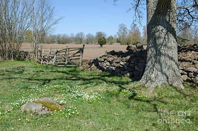 Photograph - Rural Springtime by Kennerth and Birgitta Kullman