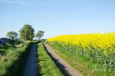 Photograph - Rural Tracks by Kennerth and Birgitta Kullman