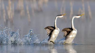 Run Photograph - Rushing For Love! by Andrew J. Lee