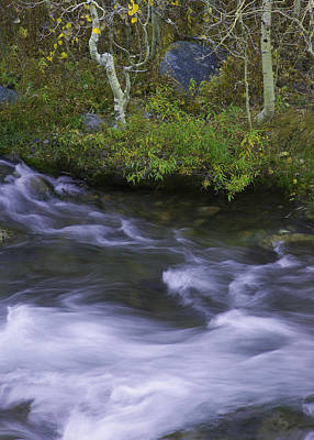 Photograph - Rushing Stream And Creek Bank - Eastern Sierra by Ram Vasudev