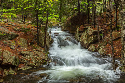 Photograph - Rushing Stream In Acadia by Susan Cole Kelly
