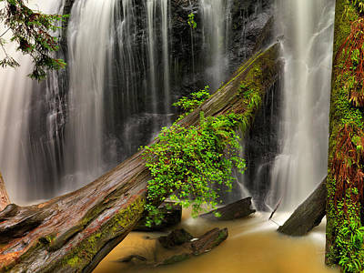 Old Growth Forest Photograph - Russian Gulch Falls by Leland D Howard