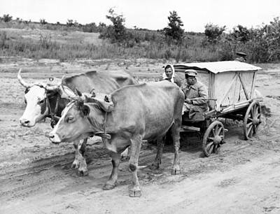 Covered Wagon Photograph - Russian Peasants With Ox Cart by Underwood Archives