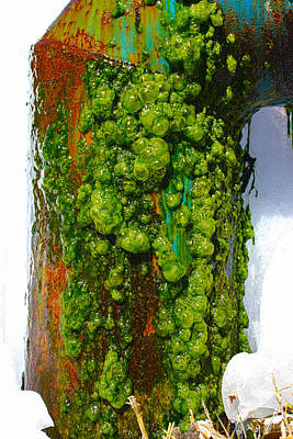 Photograph - Rust And Moss by Shane Bechler