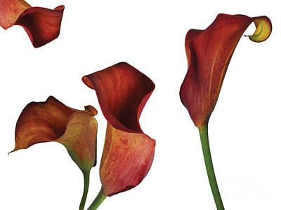 Photograph - Rust Calla Lily Collage by Heather Kirk