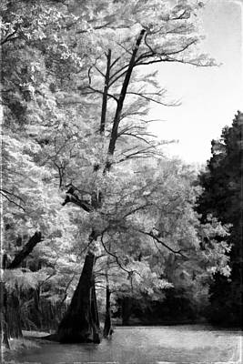 Photograph - Rustic Autumn - Black - White by Lana Trussell