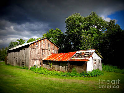 Photograph - Rustic Beauty by Crystal Joy Photography