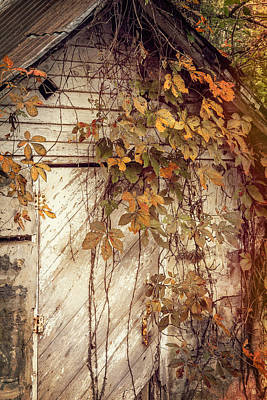 Golden Trout Photograph - Rustic Ozark Fall by Steven Bateson