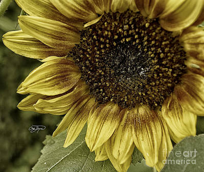 Photograph - Rustic Sun by Cris Hayes
