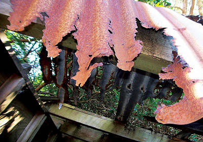 Roofing Tin Photograph - Rusting Away by Colin Dewe