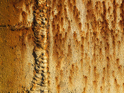 Photograph - Rusty by Jean Noren