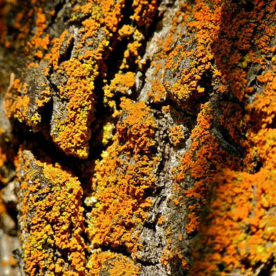 Photograph - Rusty Looking Moss Macro by Kirsten Giving