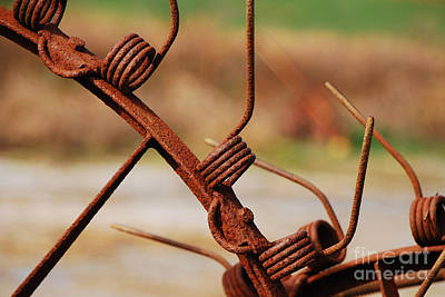 Photograph - Rusty Tines by Mary Carol Story