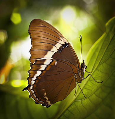 Rusty Tip Butterfly Art Print by Bradley R Youngberg