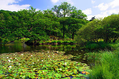 Photograph - Rydal Water Lilies by Graham Hawcroft pixsellpix