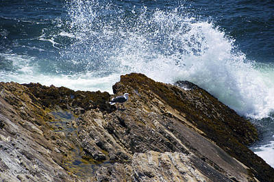 White Cap Digital Art - Seagull Sea Spray by Barbara Snyder