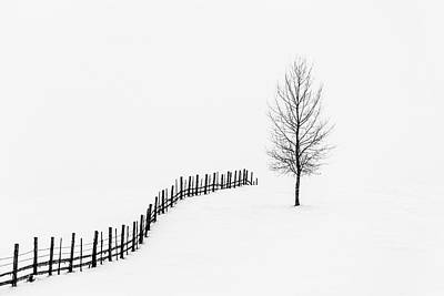 Winter Trees Photograph - S I L E N C E by Sveduneac Dorin Lucian