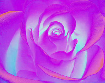 Photograph - Sabattier Rose by Bill Barber