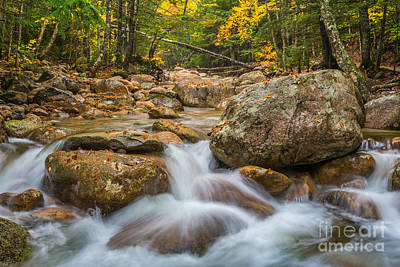 Photograph - Sabbaday Brook In Autumn by Susan Cole Kelly