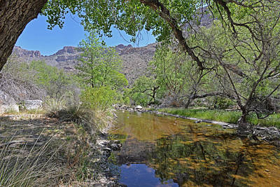 Photograph - Sabino Creek by Alan Lenk