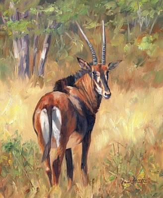 Deer Oil Painting - Sable by David Stribbling