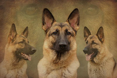 Sable German Shepherd Collage Art Print by Sandy Keeton