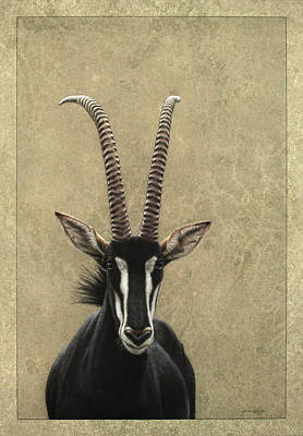 Antelope Drawing - Sable by James W Johnson