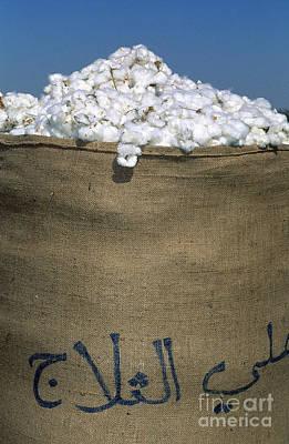 Sack Of Cotton, Syria Art Print by Adam Sylvester