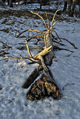 Photograph - Sacred Bones by Randal Bruck