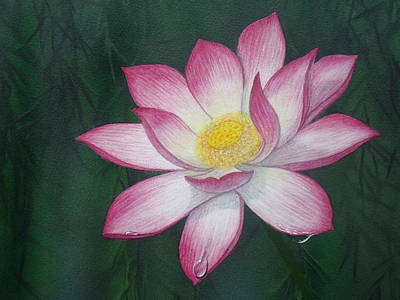 Painting - Sacred Lotus Lily by David Clode