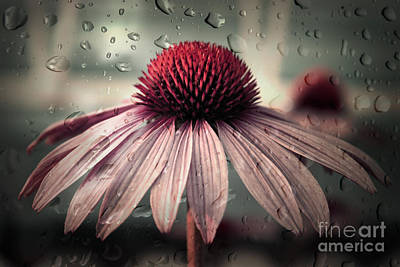 Raindrops Photograph - Sad Solitude by Aimelle