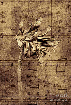 Photograph - Sad Song In Sepia by Shirley Mangini
