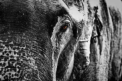 Suradej Photograph - Sad Story by Suradej Chuephanich