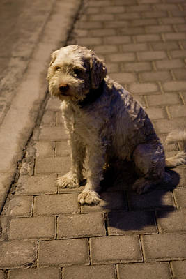 Photograph - Sad Street Pup by Lorraine Devon Wilke