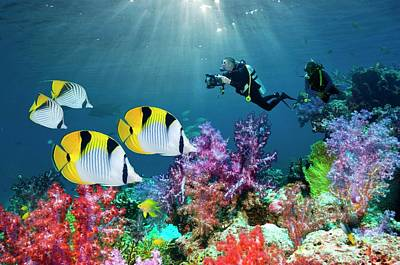 Anthozoa Photograph - Saddleback Butterflyfish And Scuba Divers by Georgette Douwma