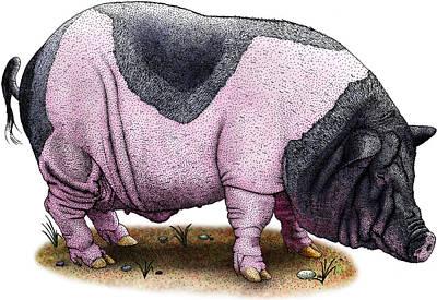 Photograph - Saddleback Pig by Roger Hall